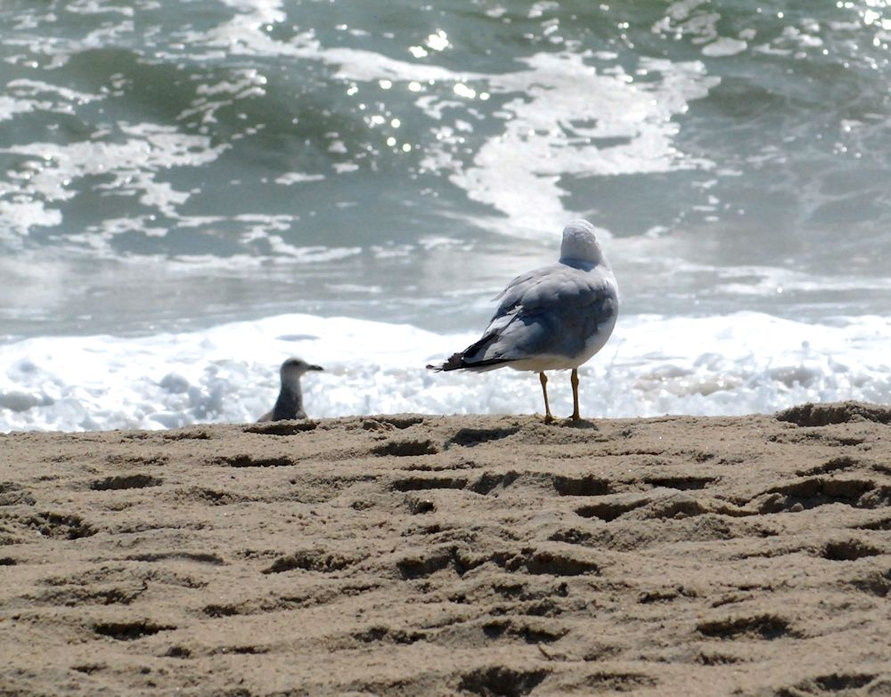 Birds on Madaket beach