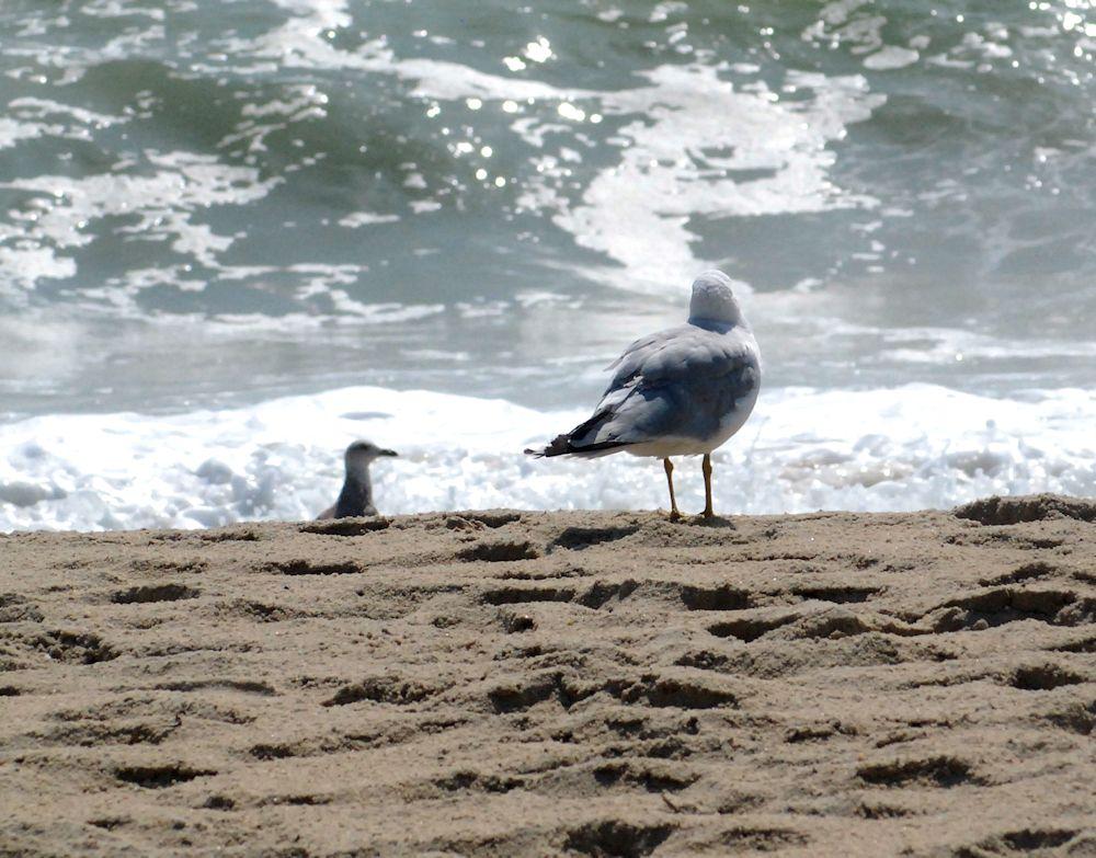 Birds on Madaket beach