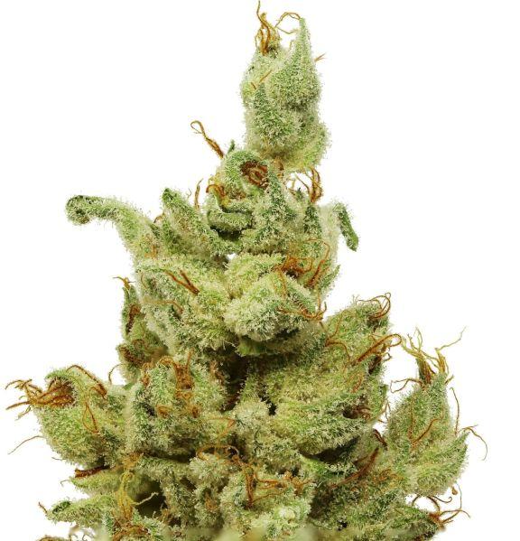 pot plant1