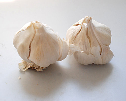 All about garlic